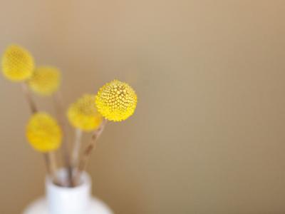 8 Healing Herbs You Can Grow